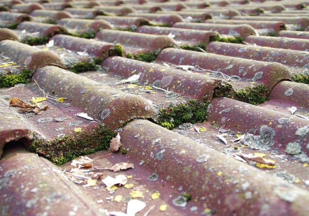 Roof Cleaning Lead Generation